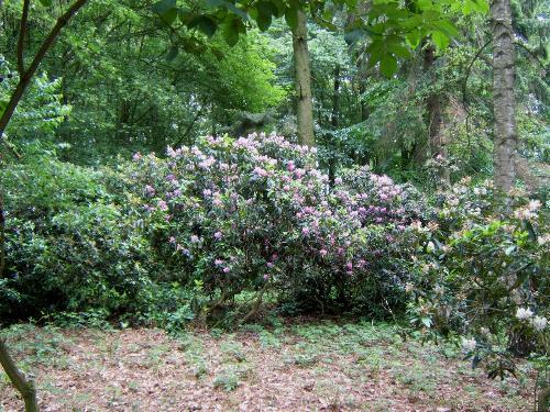 Jagdschloß zu Hohen Niendorf/ bei Kühlungsborn: Schloßpark